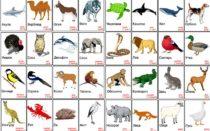 Карточки с животными на английском